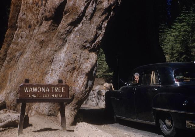 Wawona Tree Mom