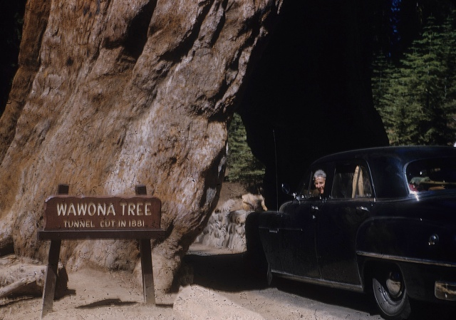 Wawona Tree Mom