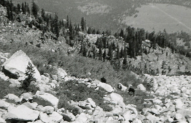 Descent from Mt. St. John and a pair of moose