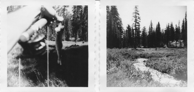 Kings Creek brook trout and meadow.