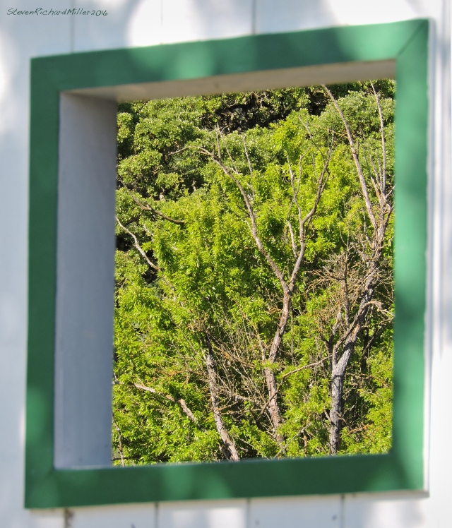 Window&TreesApr292016_1045
