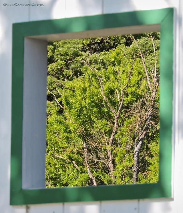Window&TreesApr292016_1045