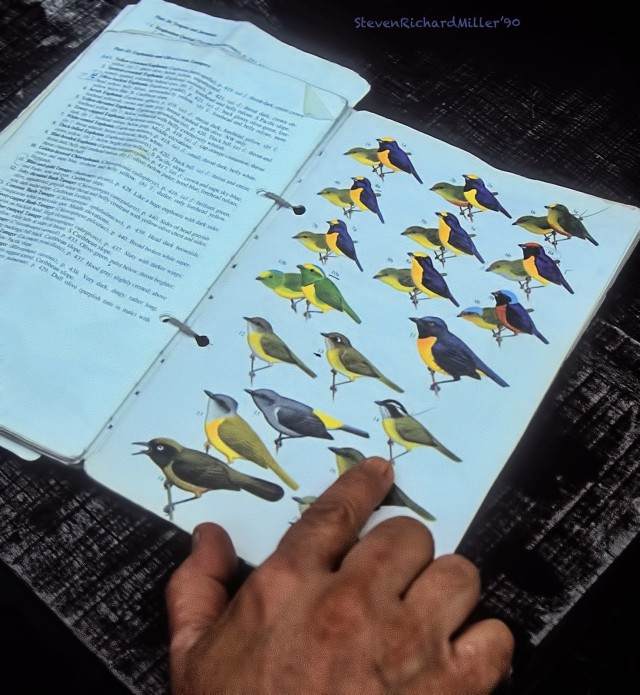 BarvaBirdBook#7'90TD