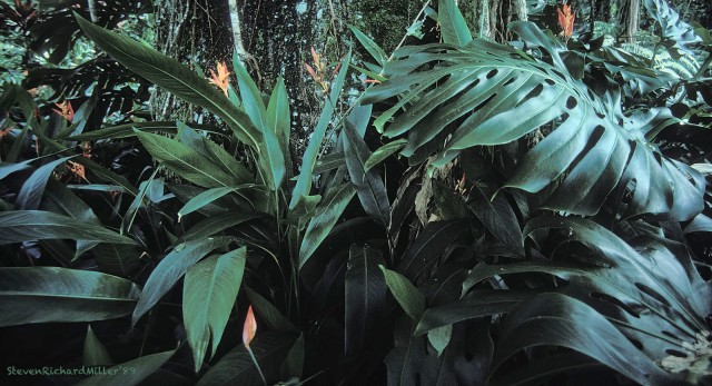 Foliage#30'89TD