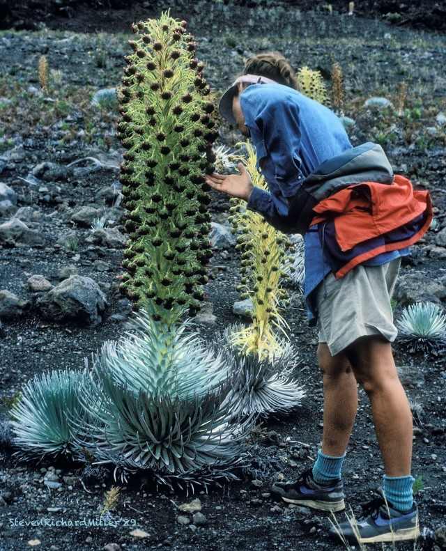 Kathy and Silversword