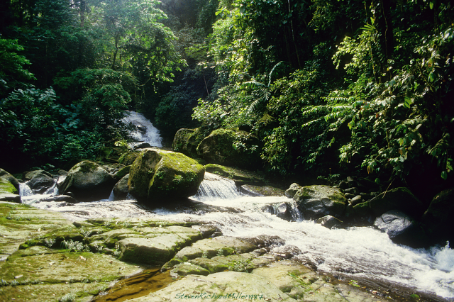 Rio Pacuare, creek