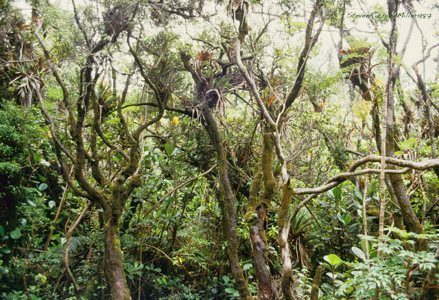 Poas, cloud forest
