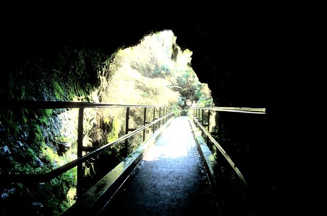 Foliage, near the mouth of the lava tube