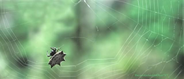 TortSpider&Web#27'87TD