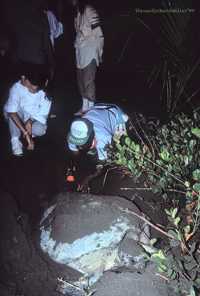 Turtle#12'90TD