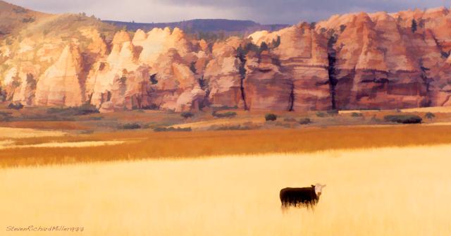 A steer