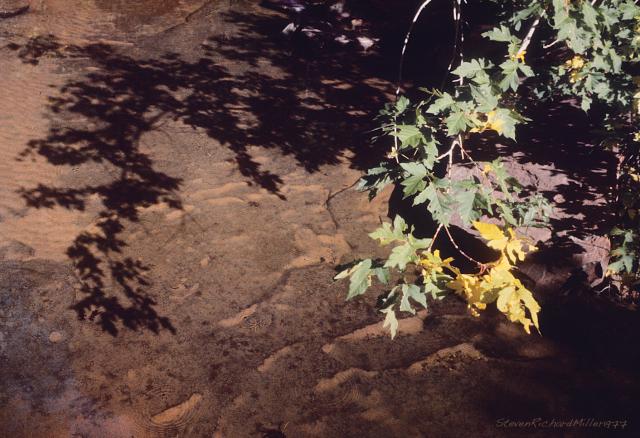 Grand Alcove, creek and Box Elder tree