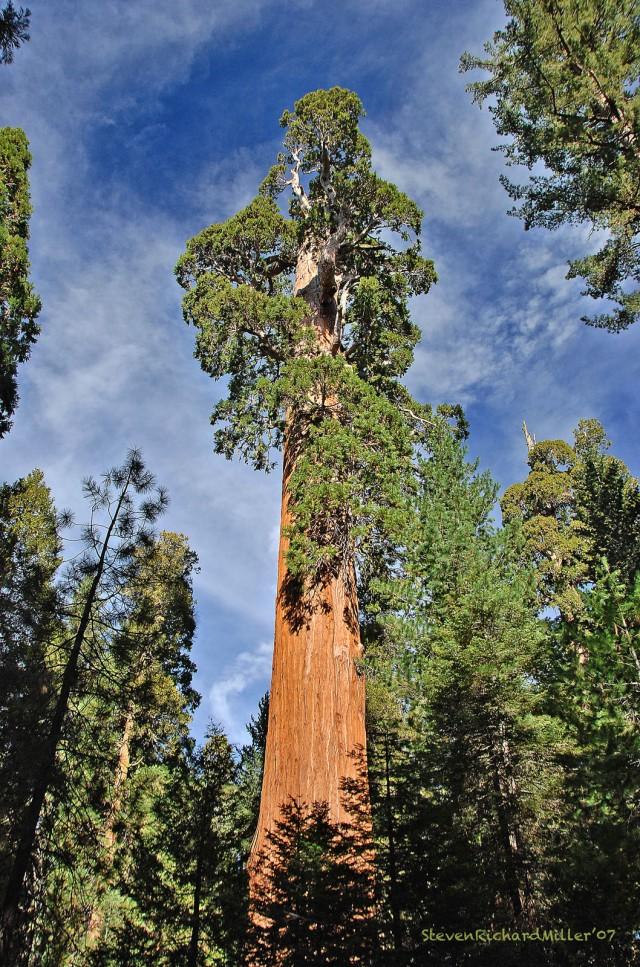 sequoia_0218t