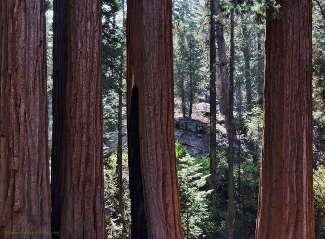 sequoiasdscn6112