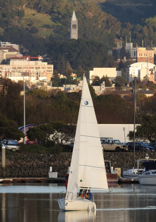 A sailboat maneuvers in the Marina, with the UC-Berkeley campus and the Campanile seen in the distance.