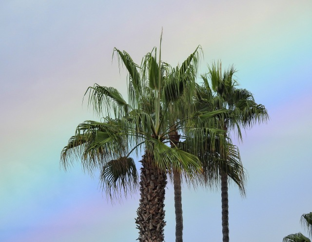 Palm&RainbowCarpinteriaDSCN3568