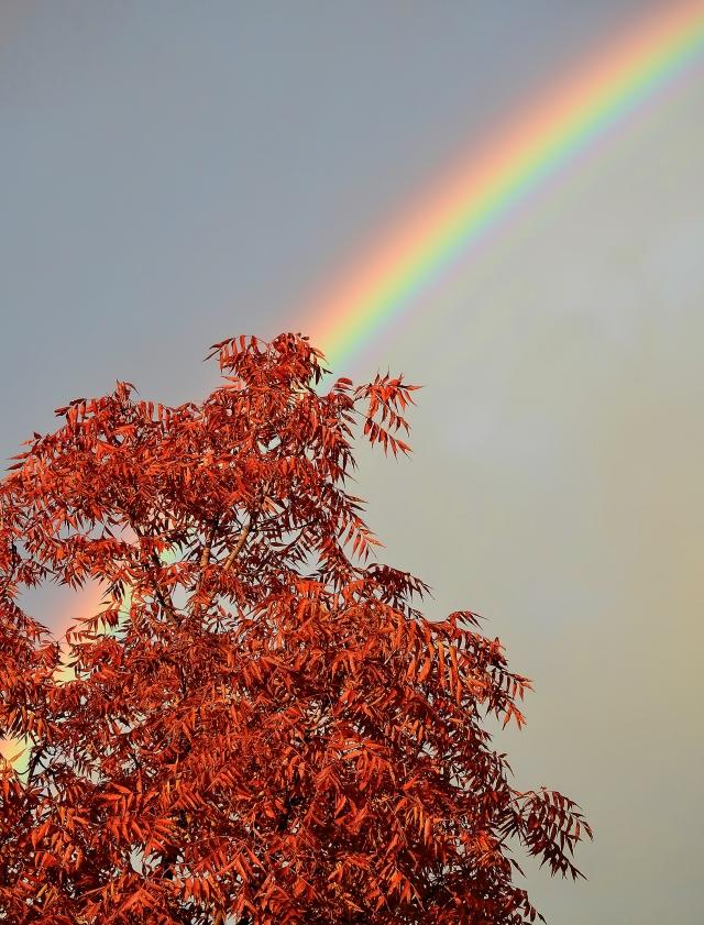 Pistachio&RainbowDSCN3924-Edit