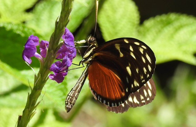 ButterflyDSCN4443