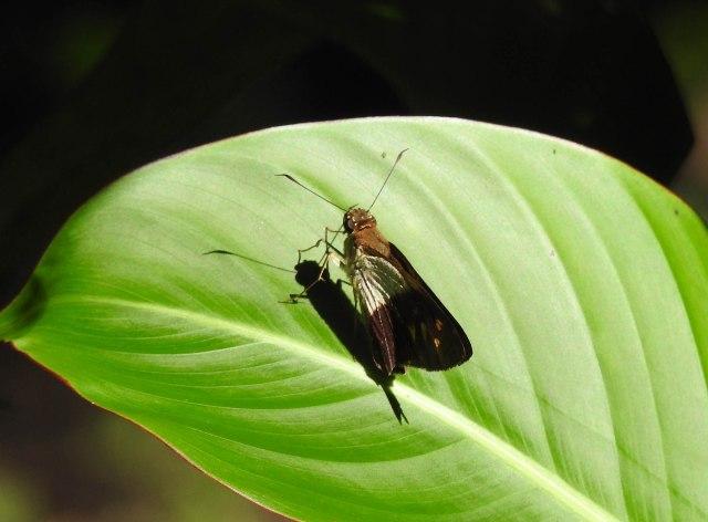 ButterflyOnLeafDSCN4841