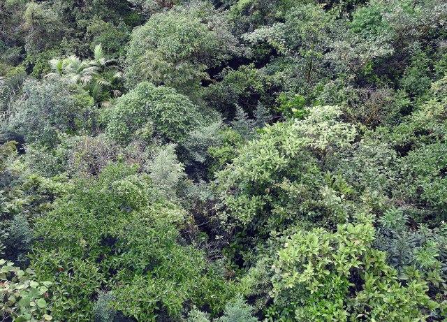 ForestDSCN4857