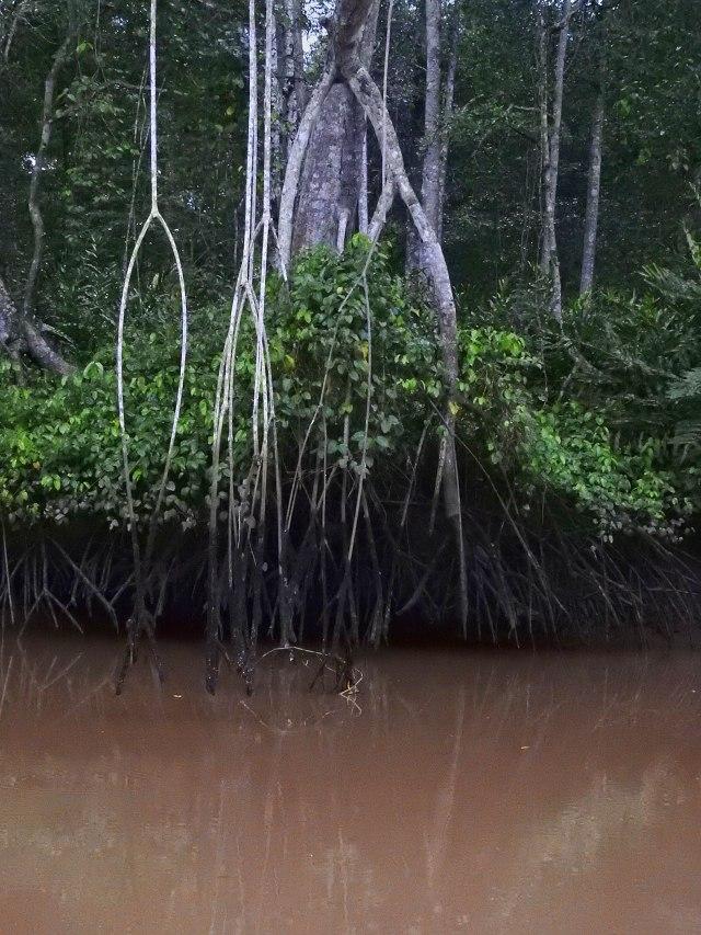 MangrovesDSCN4127
