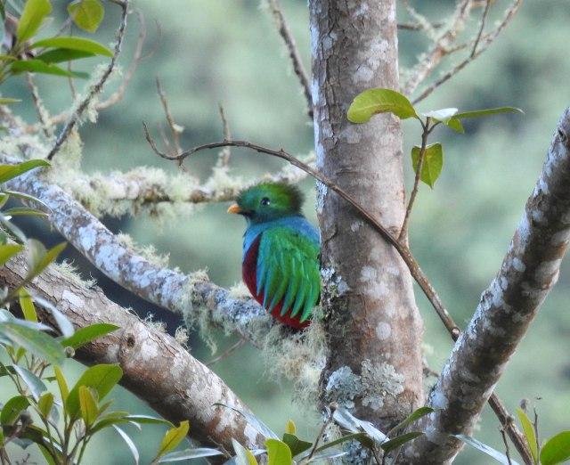 QuetzalDSCN5091