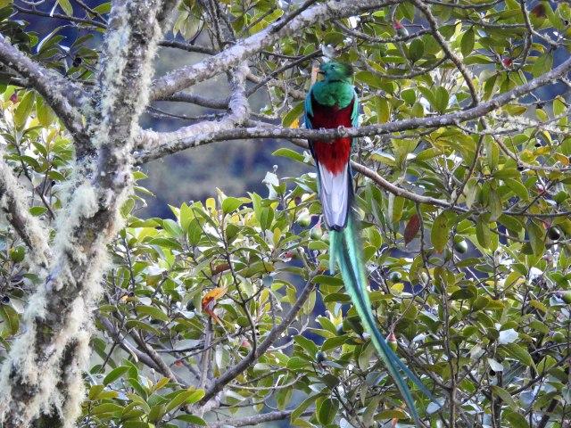 QuetzalDSCN5092