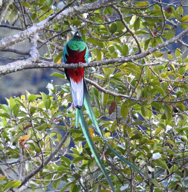 QuetzalDSCN5097