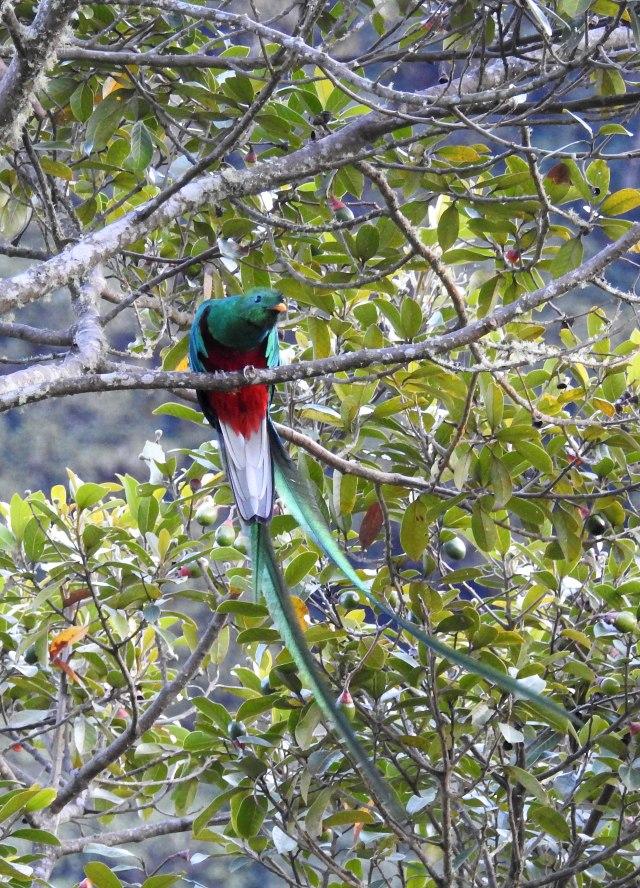 QuetzalDSCN5099