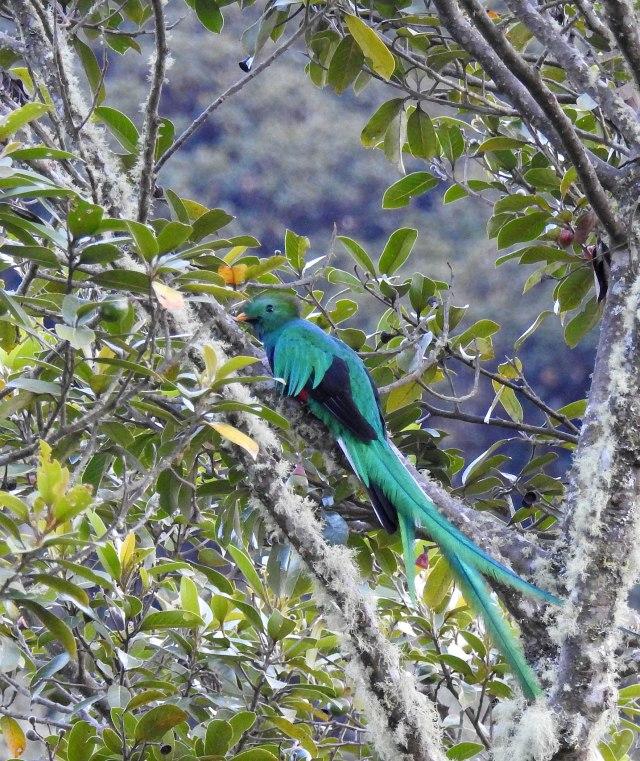 QuetzalDSCN5109