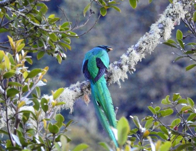 QuetzalDSCN5115