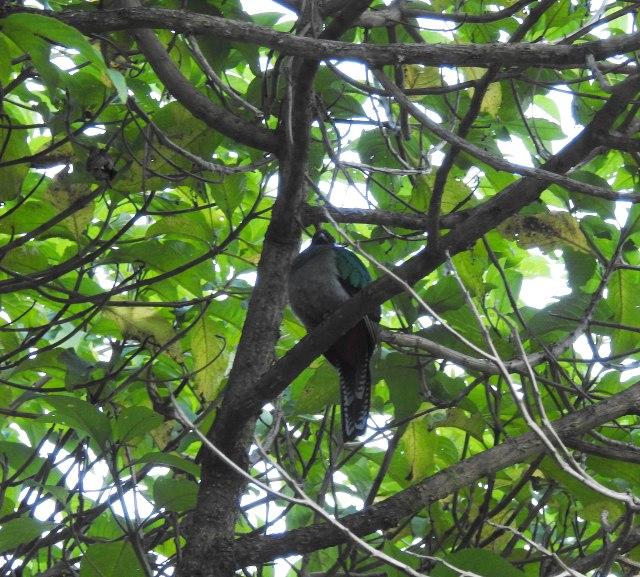 Quetzal(F)DSCN5068