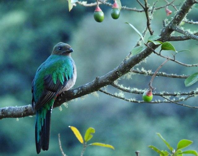 Quetzal(F)DSCN5077