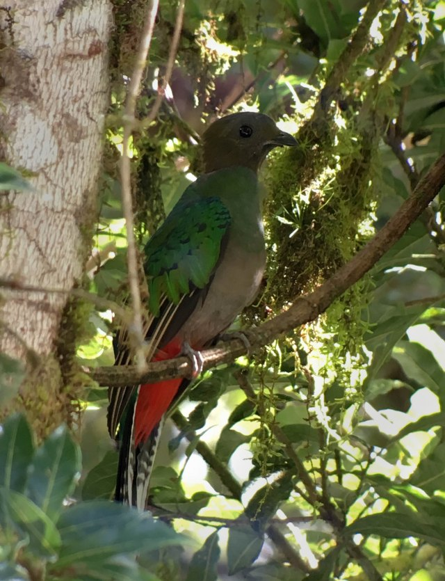 QuetzalFemaleByRiverKATHIMG_1086