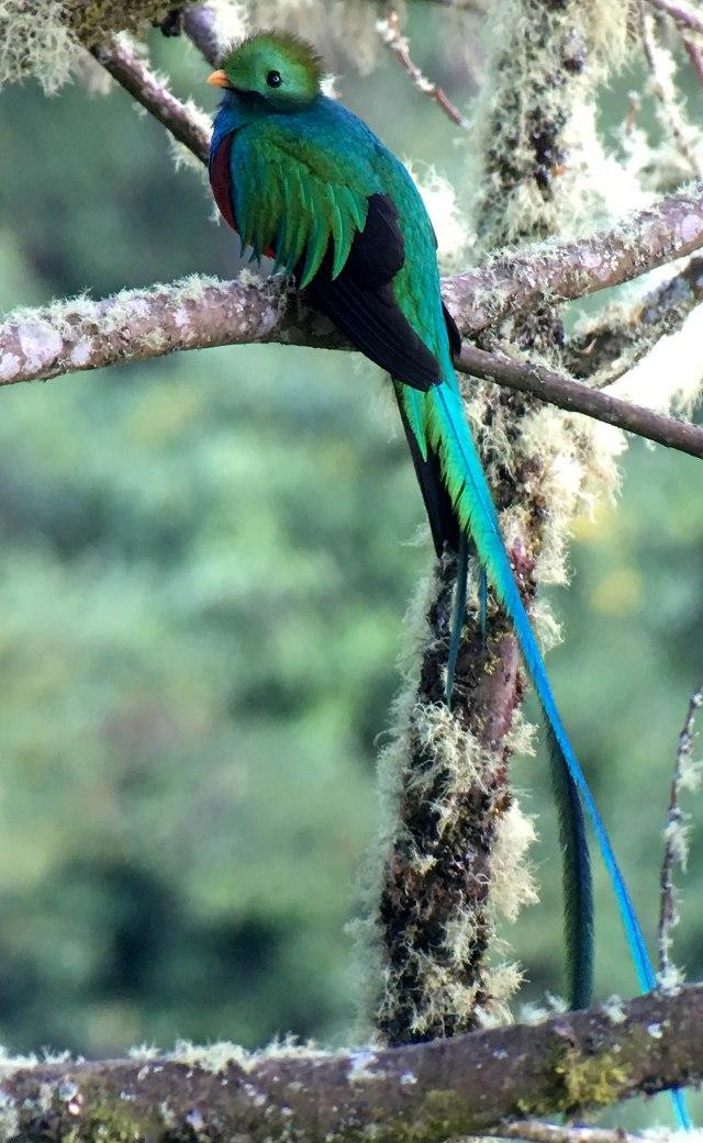 QuetzalKATHIMG_1066