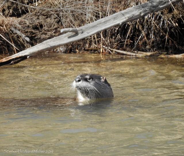 OtterDSCN0451.jpg