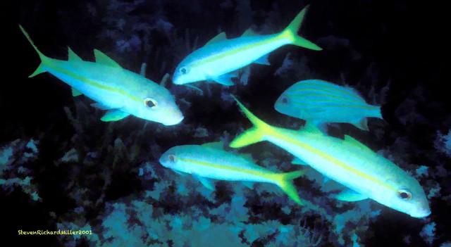 AkumalGoatfish#17'01