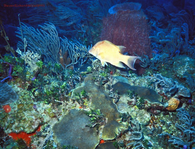 AkumalHogfish&BarrelSponge