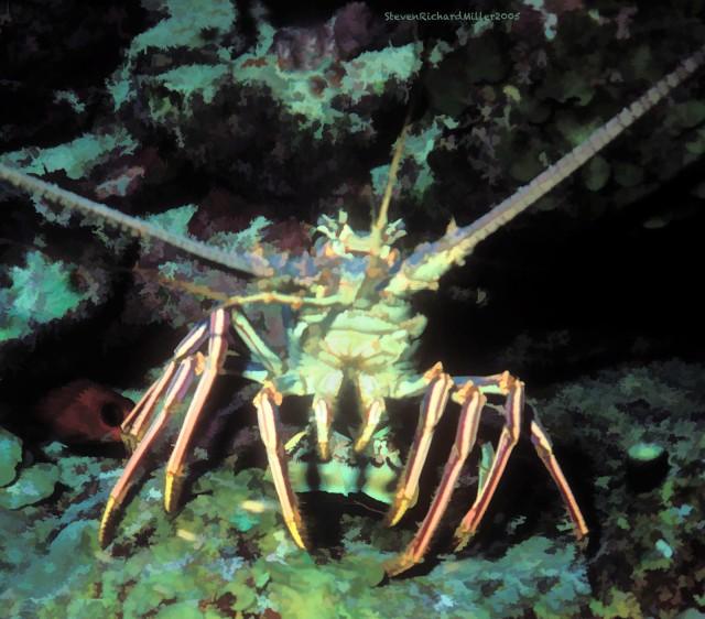 Lobster#22'05Bz