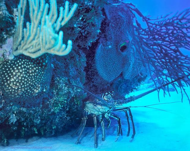 Lobster#24'05T