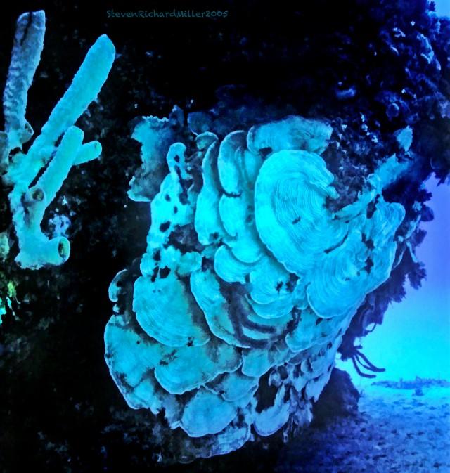 Scroll_Coral#15'05TSim.16