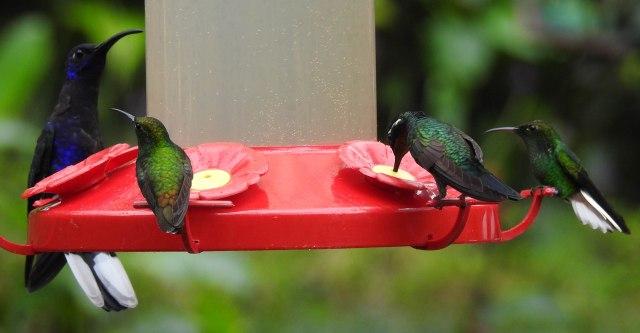 Hummingbirds3 DSCN2272.jpg
