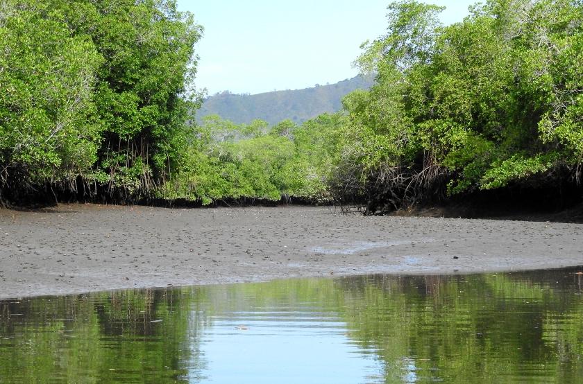 MangrovesCrabsXDSCN3448.jpg