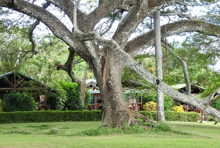 Tree&CabinsXDSCN3389.jpg
