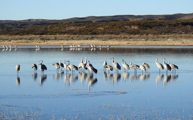 1.WetlandRoost900DSCN4591.jpg